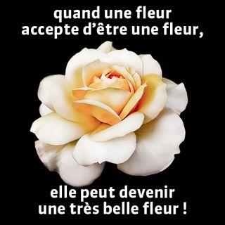 Belle_fleur
